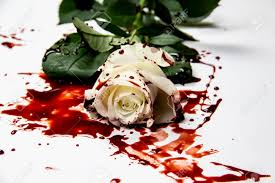 Beautiful And Bloody White Rose On The White Background. Bloody.. Stock  Photo, Picture And Royalty Free Image. Image 148798316.